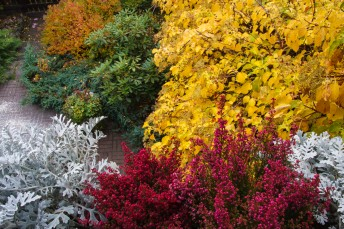 garden in the fall