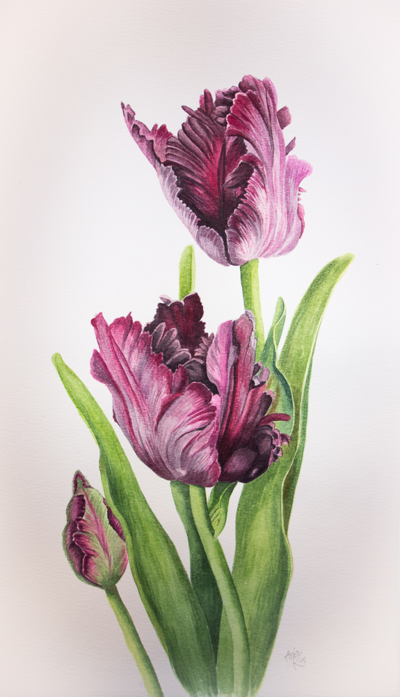 Black-Parrot-Tulips-watercolor